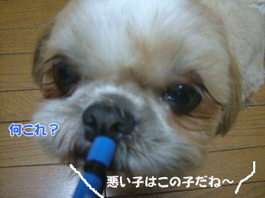 image777.jpg