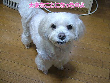 image798.jpg