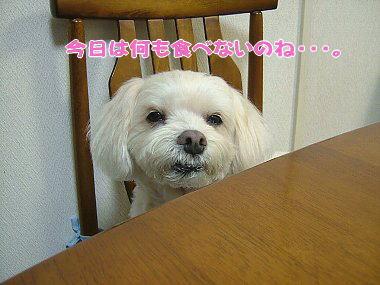 image808.jpg