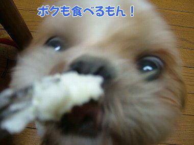 image819.jpg