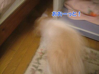 image847.jpg