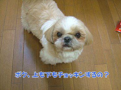 image856.jpg
