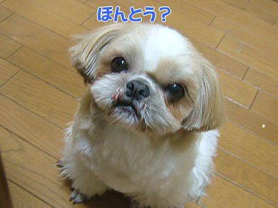 image858.jpg