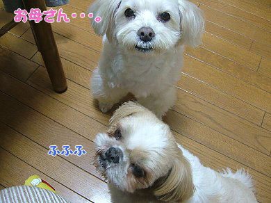 image871.jpg