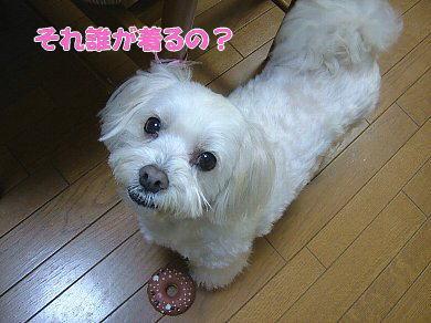 image875.jpg