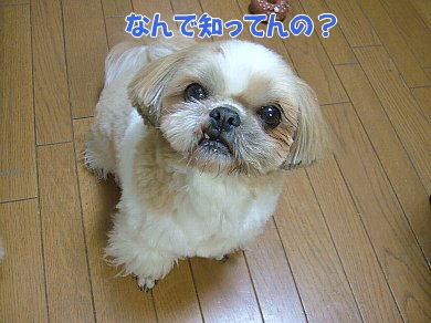 image879.jpg