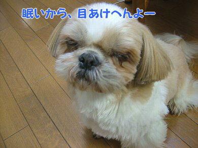 image892.jpg