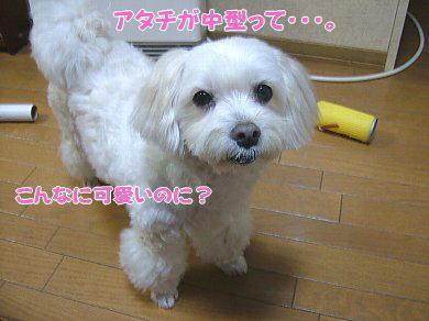 image894.jpg