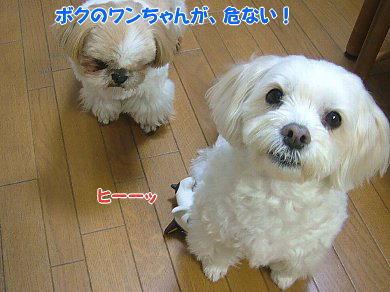 image907.jpg