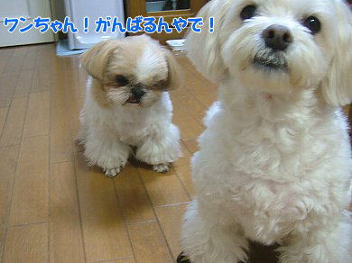 image908.jpg