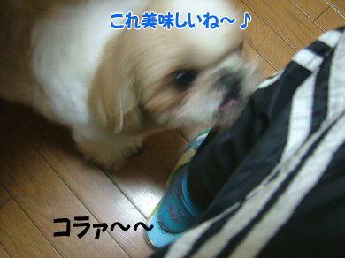 image916.jpg