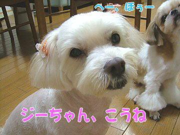 image92.jpg