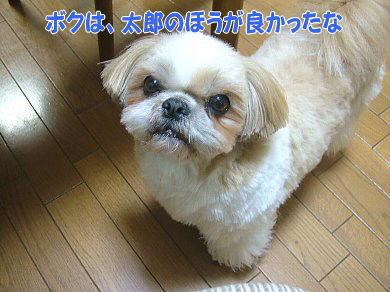 image933.jpg