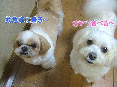 image934.jpg