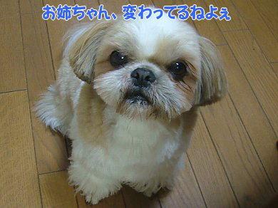 image941.jpg