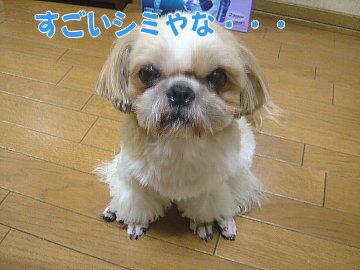 image95.jpg