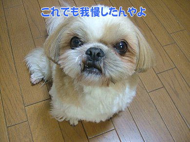 image953.jpg