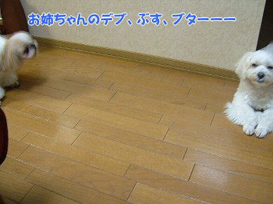 image956.jpg