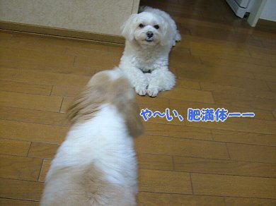 image957.jpg