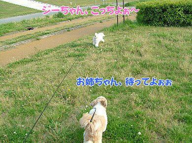 image967.jpg