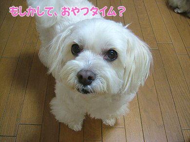 image976.jpg