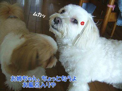 image979.jpg