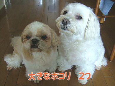 image981.jpg