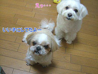 image995.jpg