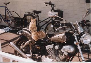 cats0002.jpg