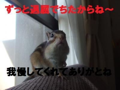 006_convert_20090917023903.jpg