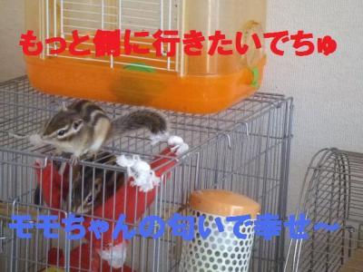 006_convert_20091110191007.jpg