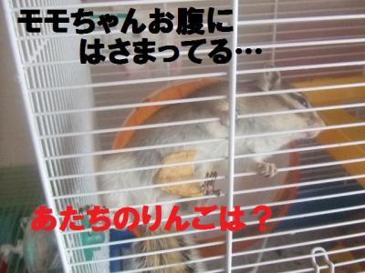 016_convert_20091015075927.jpg