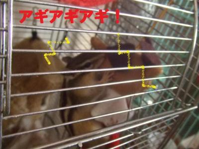 017_convert_20091124100646.jpg