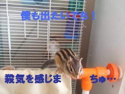 020_convert_20091004180844.jpg