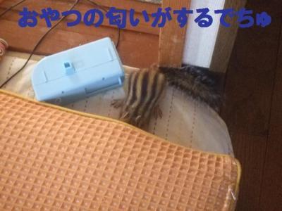 021_convert_20090924103559.jpg