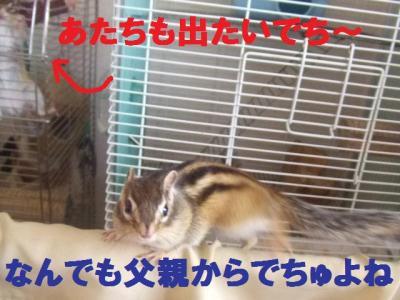 021_convert_20091004180949.jpg