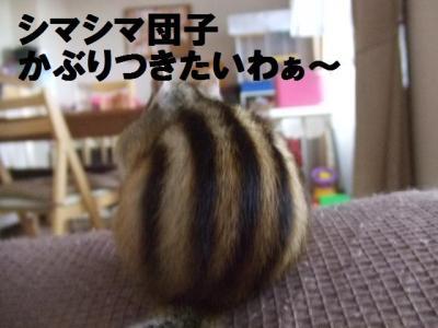 025_convert_20091114080741.jpg