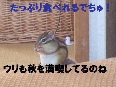 027_convert_20090924103745.jpg