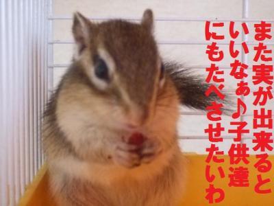 030_convert_20091027095852.jpg