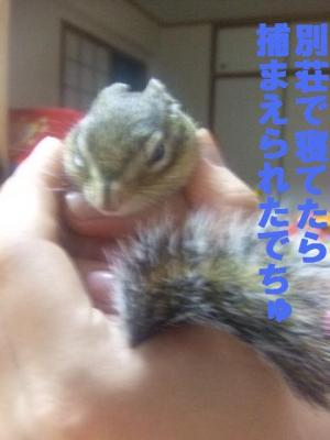 034_convert_20091011043148.jpg
