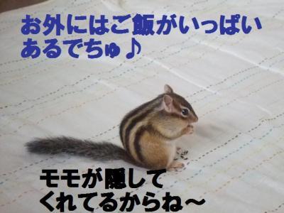 035_convert_20091123093152.jpg