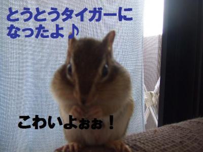 037_convert_20091123093636.jpg