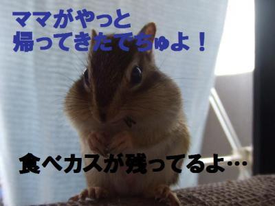 038_convert_20090917023747.jpg