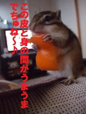 043_convert_20091112072959.jpg