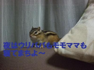 066_convert_20091119090419.jpg