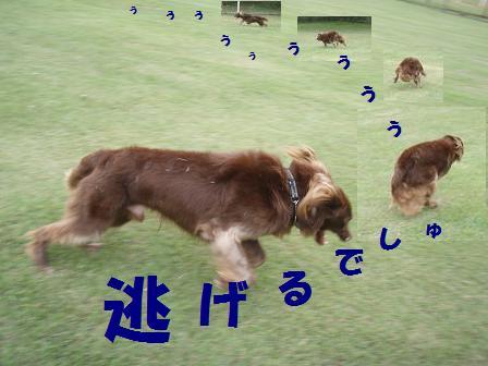 コピー ~ コピー ~ 21SEP09 047
