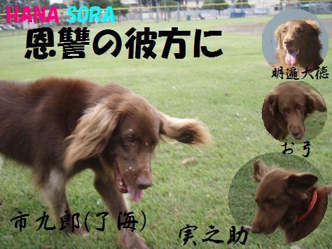 コピー ~ 21SEP09 020 hanasora onshu