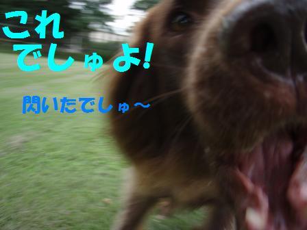 コピー ~ 03SEP09 076a
