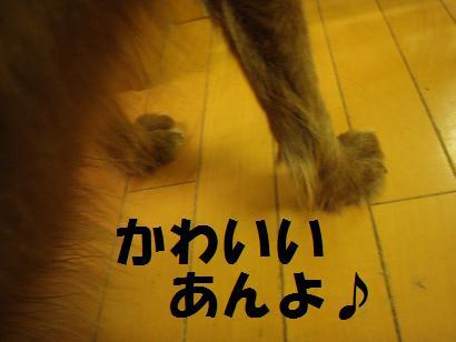 foot 003