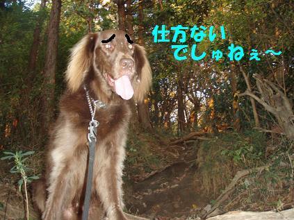 shikata26NOV09 288